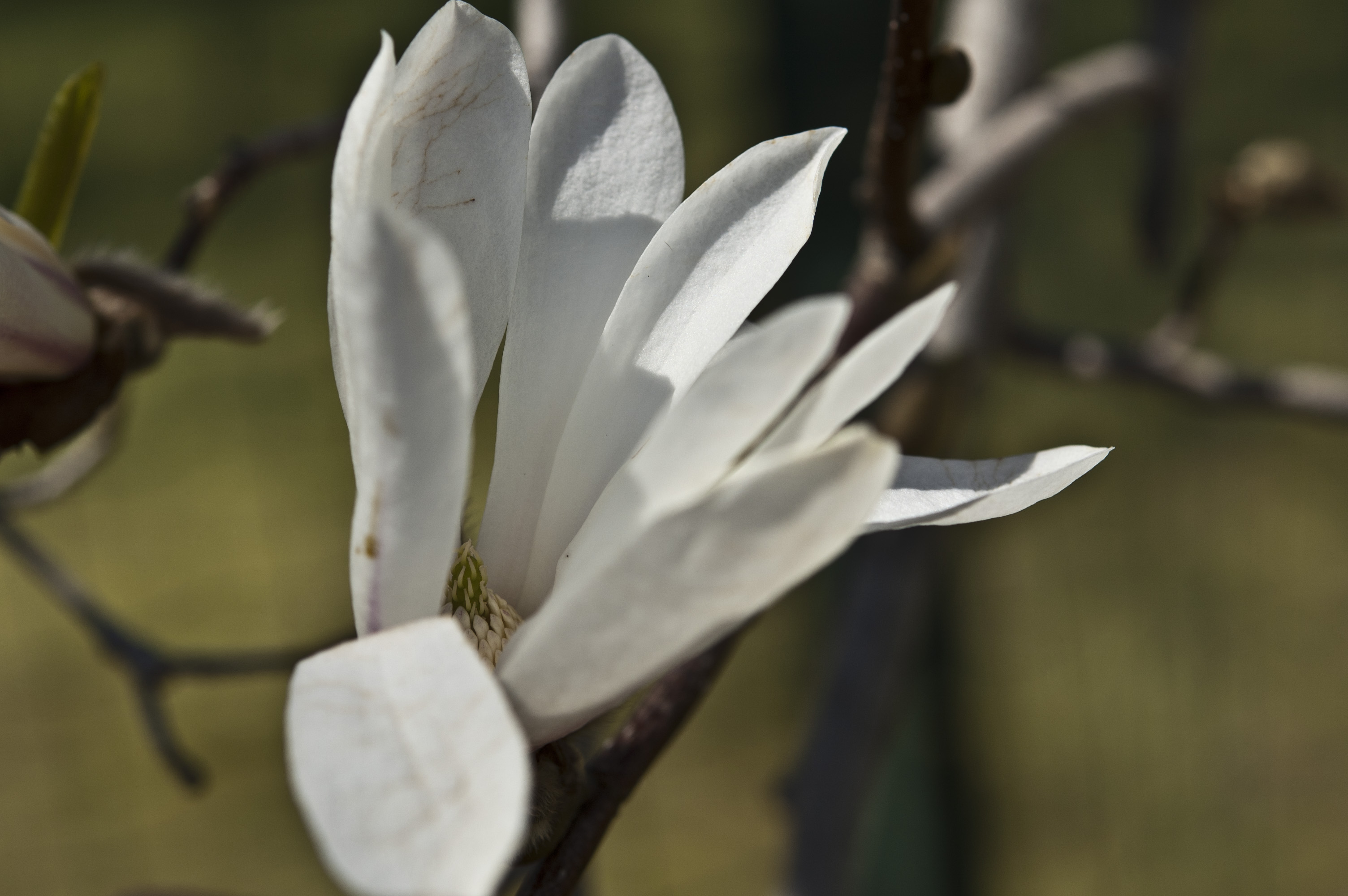 Spring at Le Barn